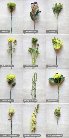 flower guide.