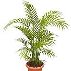 The top 10 plants for removing indoor toxins