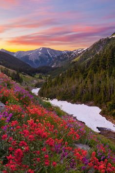 Badger Valley Wildflowers by Gary Luhm - Olympic National Park, Washington State