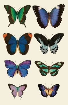 Butterfly Poster by Ivy Avenue