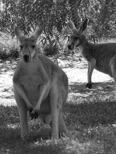 Healesville, Victoria, Australia