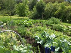 My garden midsummer in full swing