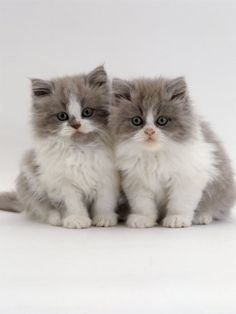 two little kittens. OMG! Cutest thing ever.