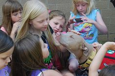 A Tale of Two Therapy Dogs - The author, a member of StubbyDog's Superhero Squad, discusses her two pit bulls and their work as therapy dogs real pitbul, anim, therapy dogs, bulli buddi, school kids, pit bulls, pitbul luv, dog behavior, heart pitbul