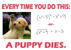 The Dead Puppy Theorem and Its Corollaries « Bowman in Arabia