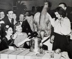 Go home elephant, you're drunk