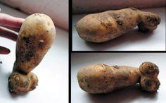 Potato or Meat & Two Veg?