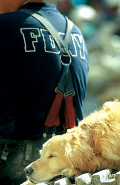 one of the dog heroes of 9/11