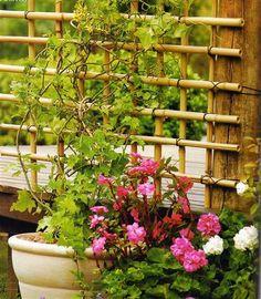 PAP de treliça de bambu.