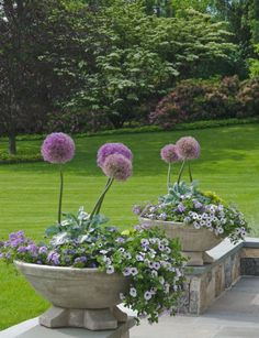 Beautiful yard with planters of allium.../