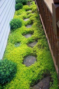 fast growing, hearty ground cover = Sedum sarmentosum.  So pretty.