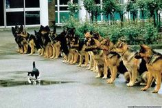 cats, friday funnies, funni anim, funny dogs, funni dog, puppi, funny wallpapers, walk, feelings