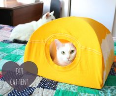 DIY cat tent from a T-shirt and a couple of coat hangers
