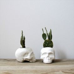 Skull planters with cactus