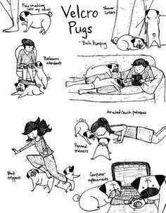 Bah Humpug: Velcro Pugs - I definitely have a velcro pug, she's a pro at shower stalking.