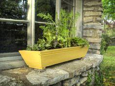 Shallow-Rooted Veggies for Growing in Window Boxes plant, windowbox, garden window, herb, gardens, vegetables garden, mini farm, windows, window boxes