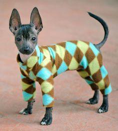 Puppies in PJs
