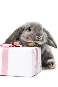 rabbit, anim, happy birthdays, gift wrapping, baby bunnies, creatur, little gifts, bunni pic, easter bunny