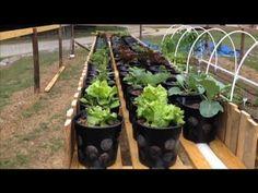A Unbelievable Rain Gutter Grow System Hybrid! A Phenomenal Design! WOW! garden general, rain gutter, garden desir, gutter grow, garden help, garden idea, grow system