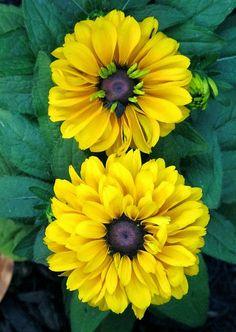 Kentlands, Spring Flowers