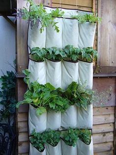 Mel's Mouthful on Mothering: Gardening this week? Looking for inspiration? An old shoe holder! :)