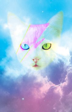 David Meowie  Digital Cat Art Print by MandyStoller on Etsy,