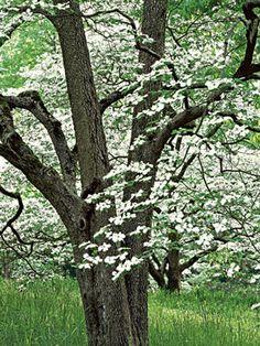 10 Beautiful Flowering Trees: Organic Gardening