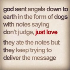 We would all do better to love as our dogs do. Pass it on. Remind someone that you love them today (not just your dog!).