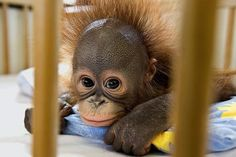 """""""Don't you just want to squeeze the cute little bundle of joy?"""" from babyanimalz.com"""