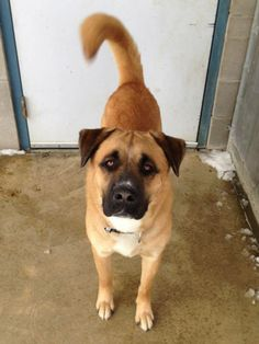 URGENT!!! PLEASE RESCUE THIS SWEET BOY CARTER!!! ELYRIA, OHIO...Kennel #  08   available for adoption  NOW