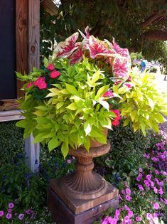 Beautiful Container Garden Ideas