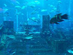 Aquarium at Mall of the Emirates in Dubai, UAE. http://www.traveladdicts.net/2009/03/maximum-dubai.html