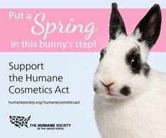 Take Action! #BeCrueltyFree
