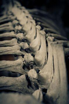 bones / Anatomical <3