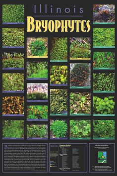 Illinois Bryophytes -- A poster of 25 common species; created by B. Crandall-Stotler, R. Stotler & L. Zhang. Made possible by Illinois Department of Natural Resources Division of Education.