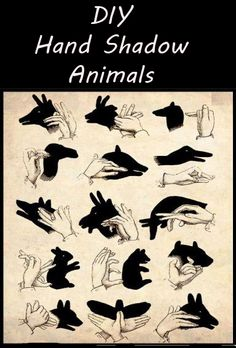 DIY Hand Shadow Animals