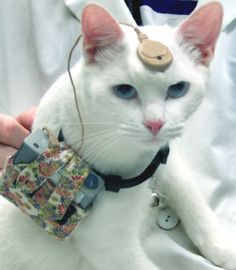 A deaf cat received a cochlear implant and now can hear rock-n-roll like the cat in today's Pic Pin. (BOTH  are cats with electronic hearing devices on their heads.)