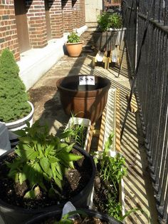 RainGutter sub irrigated planters from Frieda Lim's Slippery Slope Farm, Brooklyn