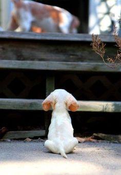 #puppy #sweet
