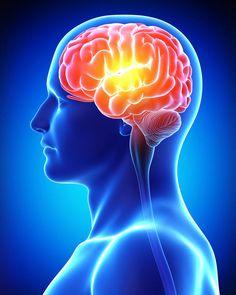 Brains molecular memory switch identified