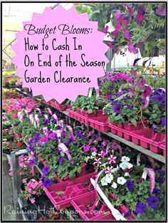 How to Cash in On End of the Season Garden Clearance and Save a Ton of Money!