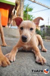 K Rescue Dog Foster Seattle Wa