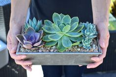 Adorable succulent garden.