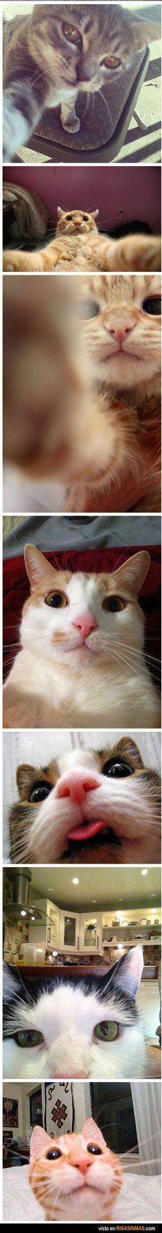 Haha cat selfies!!!!