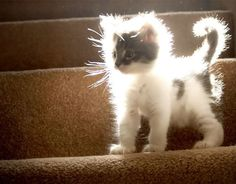 lights, angel, cats, animals, fuzzy wuzzy, kittens, kitti, kitty, cat lady