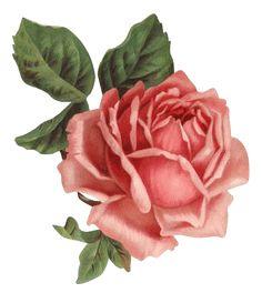 ZOOM DISEÑO Y FOTOGRAFIA: 30 rosas vintage para scrap, rose png