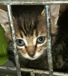 Get me outta here!   #cats #rescue