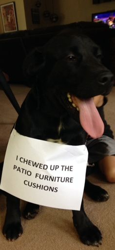 I chewed up the patio furniture cushions…
