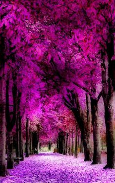 Shades of purple - Variations  of Pantone's Color of the Year 2014: Radiant Orchid the color purple, colors, violet, flowering trees, path, forest, nature photography, walk, purpl passag