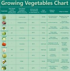 How to Grow Your Own Food Vegetables Chart